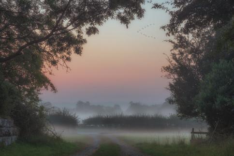 Farmland Fog No 4