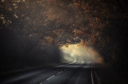 Woodland Roadway No 2
