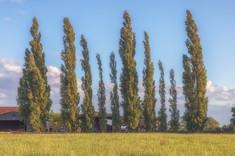 Maxstoke Tree Farm.jpg