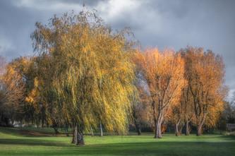Coleshill Willows 2020 No 3.jpg