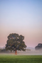 Morning Fog in Coleshill No 2.jpg