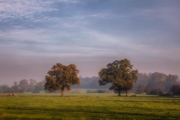 Autumnal Tree Sunrise No 5.jpg