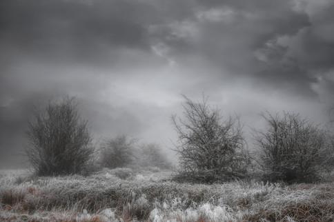 Frozen in Coleshill No 6