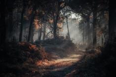 Misty Woodland Pathway.jpg