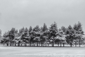 Winter Trees Of Coleshill No 4