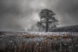 Frozen in Coleshill No 12