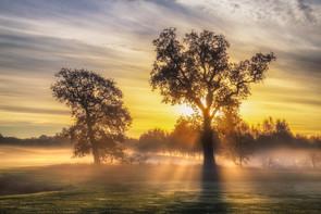Light Up The Morning.jpg