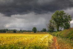 Storm Over The Barley