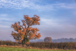 Autumnal Tree Sunrise No 4.jpg