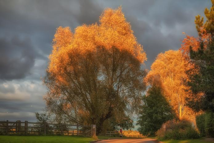 Autumn Tree Drama.jpg