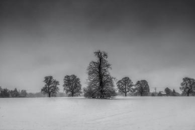 Winter Trees Of Coleshill No 2.jpg