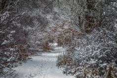 Snow Tree Tunnel No 3