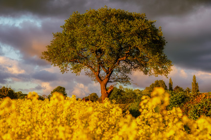 In a Sea of Yellow