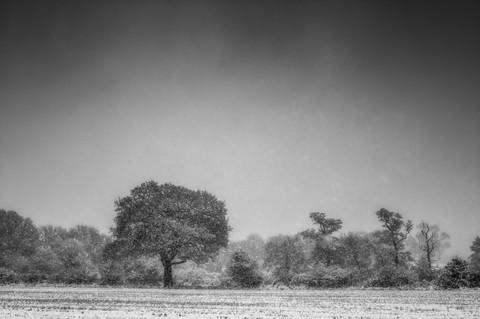 Winter Trees Of Coleshill No 1.jpg