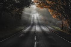 Woodland Roadway No 4
