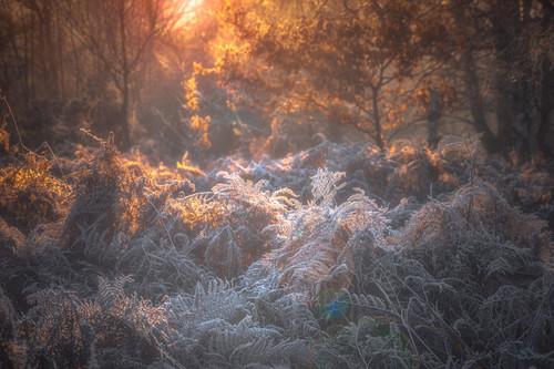 Sutton Park Frozen Beauty No 5.jpg