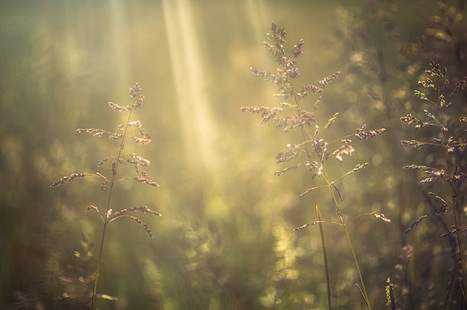 Spring Grass No 5