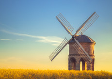 Chesterton Windmill and the rapeseed