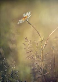 Ladybird and Daisy No 3