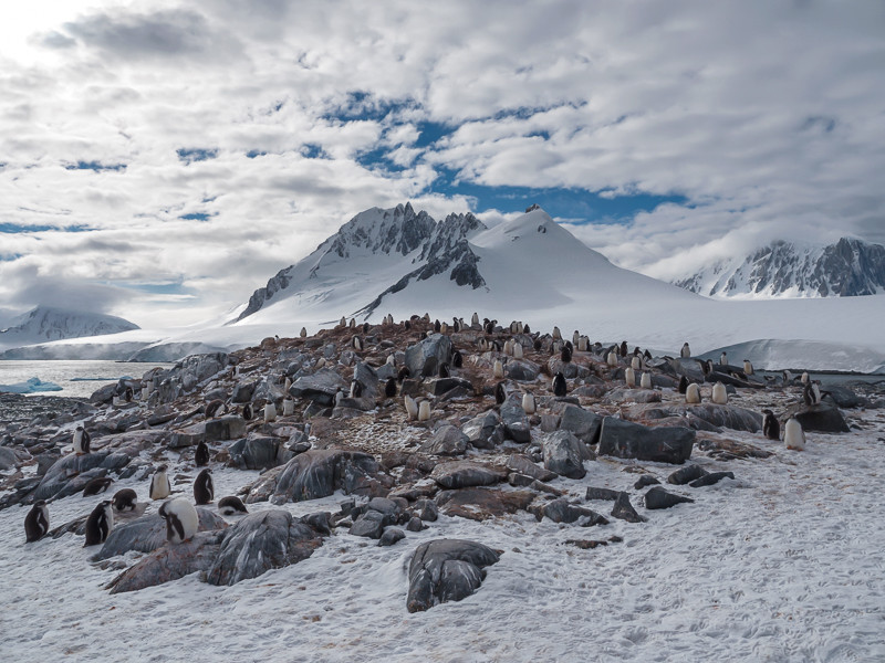 Penguin Colony