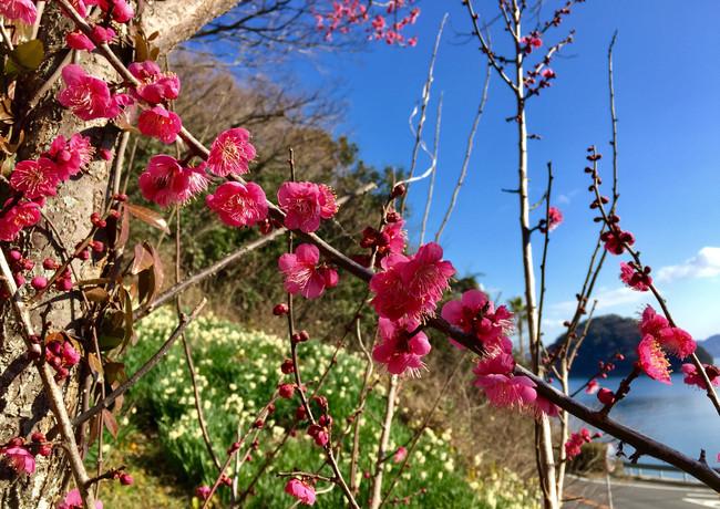 早春の風景