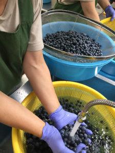 blueberry_en2-225x300.jpg