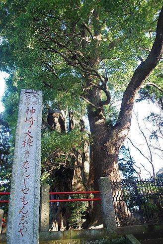 1920px-NanjyaMonjya-tree,Kozaki-town,Jap