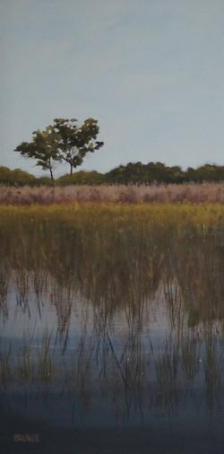 Tree in the Marsh 5