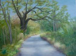 An Island Road