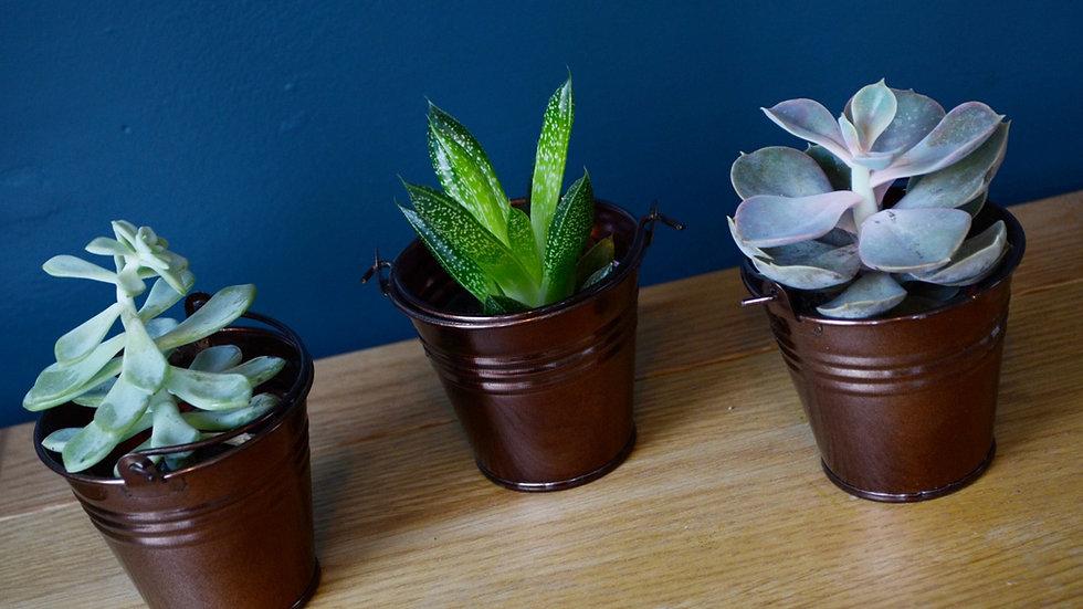 Mini Plant Trio Copper
