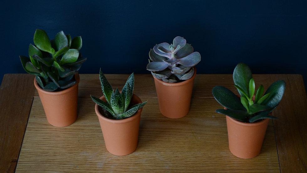 Mini Terracotta Plant Selection