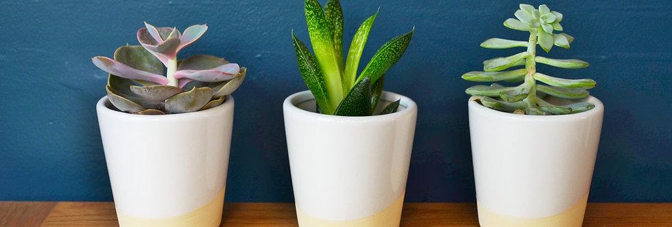 Mini Plant Trio