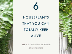 6 beginner-friendly houseplants you can totally keep alive