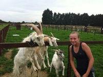 goats with girl.jpeg