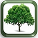 Learning Tree LOGO 2.png
