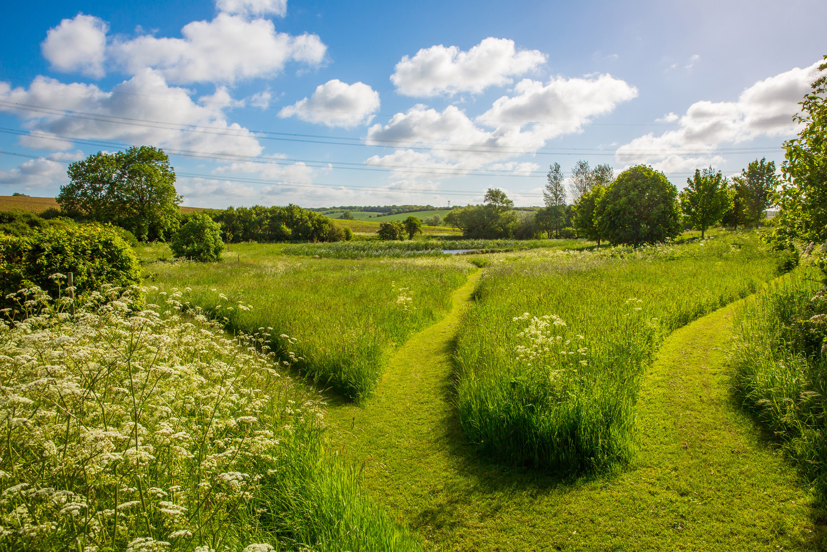 meadow with paths.jpg