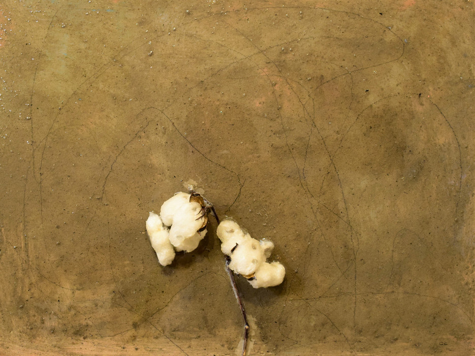 ashes to ashes, 18x24,cotton stalk,pencil,ashes,resin on canvas,2021.JPG