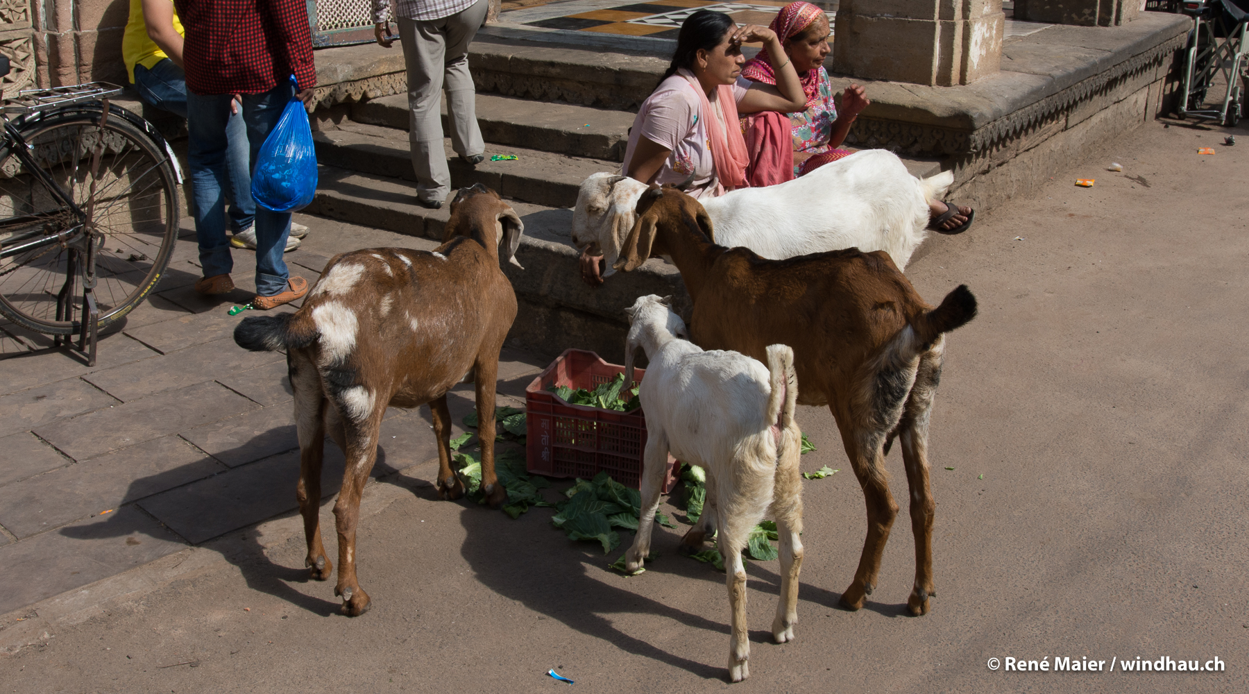 Indien_2016_026