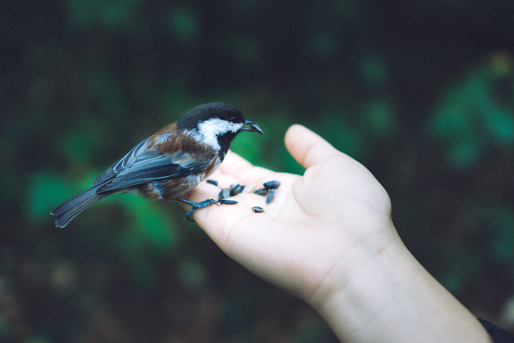 Bird eating from a person's hand