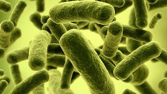 Probióticos e o Colesterol