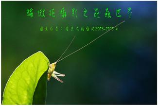 15 論微距攝影之昆蟲世界
