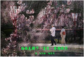 """17 論櫻花樹下""""畫意"""" 疊拍攝影"""