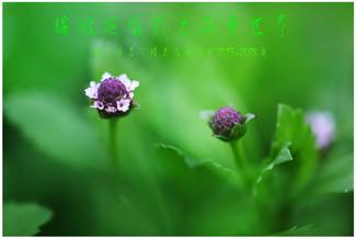 14 論微距攝影之花卉世界