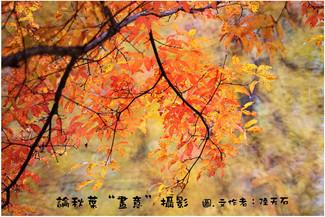 """13 論秋葉""""畫意""""攝影"""