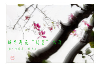 """02 論紫荊花""""彩墨""""攝影"""