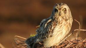 Moorland photography competition showcases the birdlife of the UK uplands