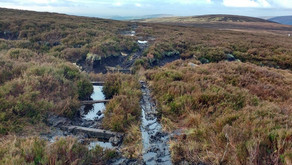 Moorland peatland restoration project reduces carbon emissions on areas of bare peat by 60%