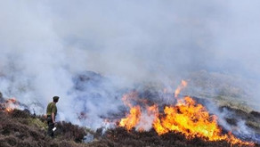 Here's how controlled burning on moors benefits wildlife and conservation – Adrian Blackmore