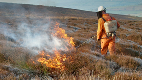 Government recognises necessity of heather burning as an essential tool for moorland management