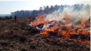RSPB join forces to carry out Muirburn research, despite campaigning against its use